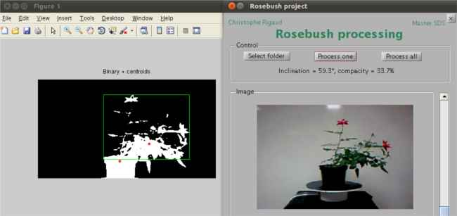 Screenshot of software for rosebush or plant inclination and compacity computing